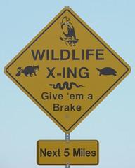 wildlife x-ing