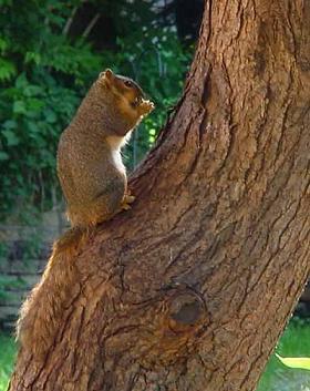 squirrel-08