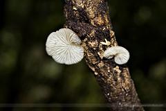 Tiny Fungi II