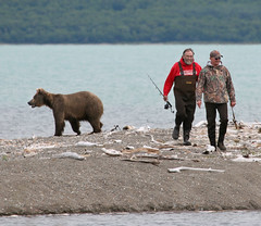 Time to find another fishing spot (Rob Kroenert) Tags: bear park nature alaska river fishing fishermen wildlife salmon lodge national grizzly brooks katmai katmainationalpark