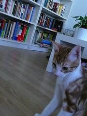 retrato de una obsesin I (La Petite Claudine) Tags: gato batn