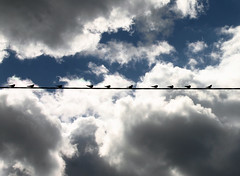 Ten birds on a wire - by Steffe