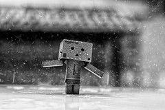 Been waiting for rains for  long, now I wanna sing a song! :D (2k Photography) Tags: love wet water rain canon fun eos drops foray raindrops 50mmf14 soaked 2k danbo revoltech danboard kissx2 ~2|{~ pushpdeeppandey swinginthebackground