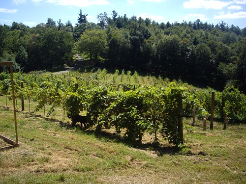 View of the grapevines when you step from the main house