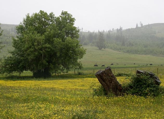 Tree and Stump
