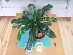Pante (Frangines) Tags: wood plant green home plante table floor turquoise decor maison dcoration divan chandelles naperon frangine