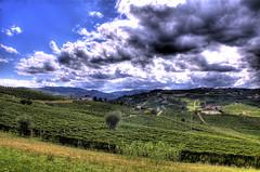 moscato16 (Vittorio Ubertone) Tags: wine vigne canelli moscato