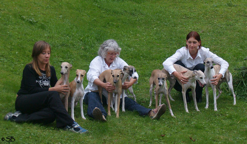 Gruppe mit Whippets