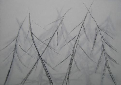Trees drawings by Matthew Felix Sun 5