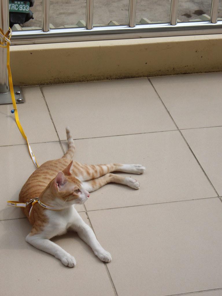 [家貓照片]   pentax 跟我好幾年的A20