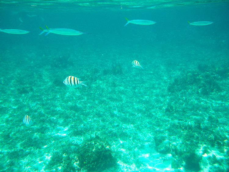 20100503-Jamaica WP-4115