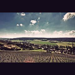 Paysage Vignoble Champenois (Telemak) Tags: france st vintage landscape wine champagne vin paysage reims vignes hdr hdri picardie coqs marne telemak télémak agnan