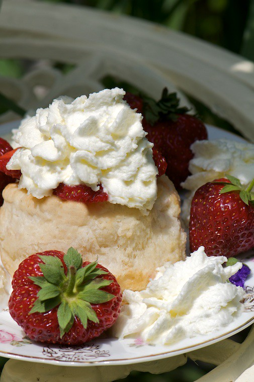 Old-Fashioned Strawberry Shortcake | Fresh Dessert Blog