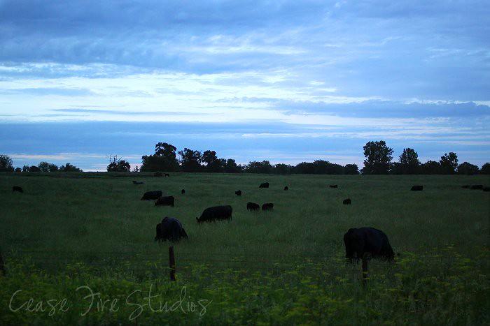 06-13-darkcows