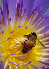Filling it up ... (pranav_seth) Tags: flower macro colors bee malaysia nectar kualalumpur kl anawesomeshot