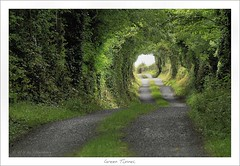 Green Tunnel (HaukeSteinberg.com) Tags: road trees ireland light shadow green rural landscape clare tunnel irland countyclare ire sigma70300 boreen 400d superaplus aplusphoto diamondclassphotographer fiveflickrfavs flickrslegend
