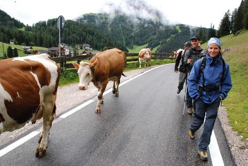 Alpenexkursion 2007