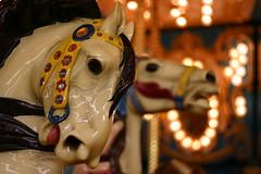 Carousel Horses (Lisa GH) Tags: ocean horses beach fun newjersey colorful carousel carouselhorses boardwalk amusementpark brightlights rides merrygoround oceancounty labordayweekend goodtimes seasideheights endofsummer prettycolors woodenhorses amusementparkrides whitehorses