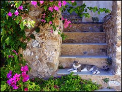 Pink, Stone, and Cat (ARKNTINA) Tags: flowers stone wall cat europe steps hellas greece catsanddogs monemvasia peloponnese random6 gr08 peloponnesemodern