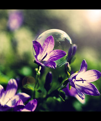 I need to breathe (JoGo...) Tags: flower air fresh bubble breathe microclimate microenvironment flowerinabubble