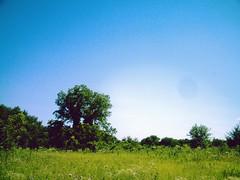 trail near Highland park, Lake Lavon, Texas, on a June day