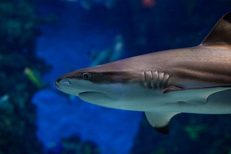 Barcelone - Gentil petit requin
