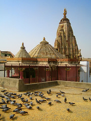Pigeon Rooftop (Hueystar) Tags: blue roof sky india tree birds temple pigeon seed gettyimagesindiaq1