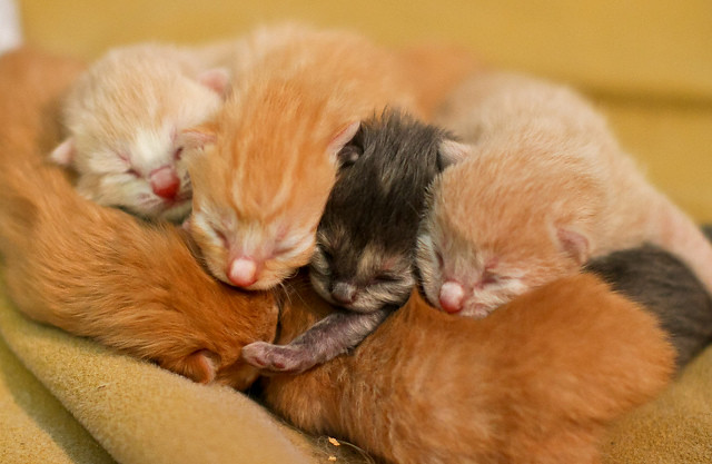 cute new born kittens
