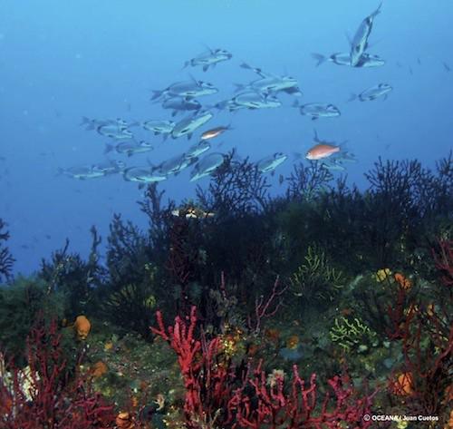 5187063400 1993c72de6 Habitats en peligro - H�bitats en Peligro ? Jardines de Gorgonias