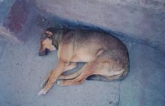 Peru - Dogs04 (honeycut07) Tags: 2004 peru kids america children cross south orphans solutions volunteer ayacucho cultural