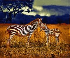 Lesson in the wild. (theseanbee) Tags: africa tanzania bravo gothic canvas mwanza tz guidinglight brillianteyejewel