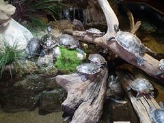 Tulsa Aquarium - 24.jpg