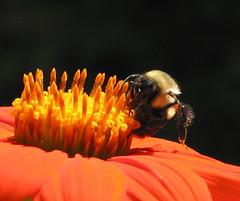 bee fruitful