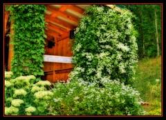Climacus and Sedum (FrAntknee) Tags: hdr orton artizen