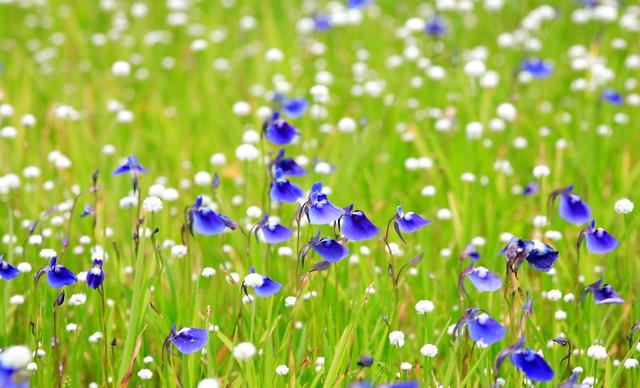 flower drops...