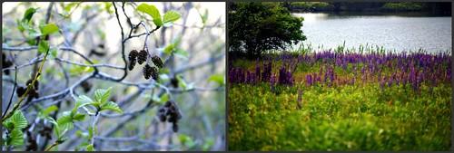 B2B:Flora