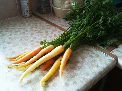 Carrots, Picked Today