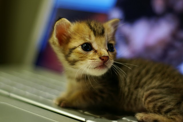 cute tabby kitten cat pic