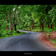 The way to  Wildlife Sanctuary, Thirunelli (joe vadassery) Tags: road wild tree forest way wayanad brahmagiri pakshipathalam thirunelli tholpetty mywinners santury joevadassery