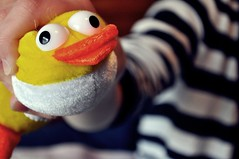 Squished (alliesonmichelle) Tags: cute eye face up contrast swimming duck close squished bugging