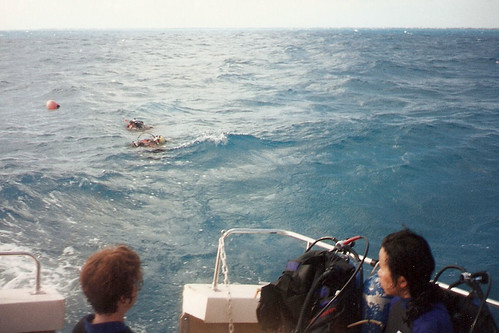 Divers in the water