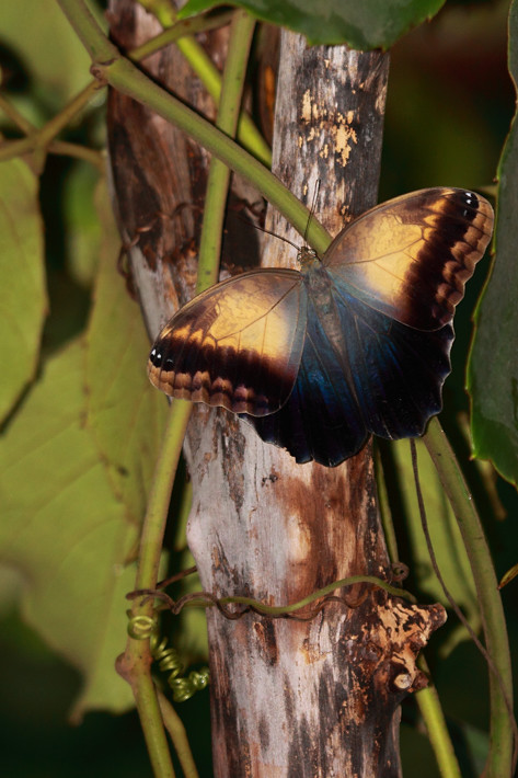 110710_butterfly03