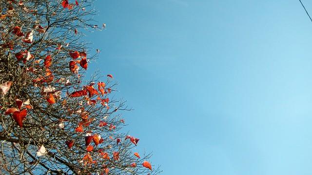 2010-11-09 tree 002