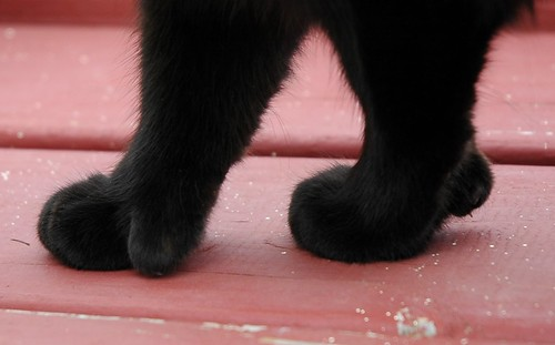 Monkey-cat paws by eva101.