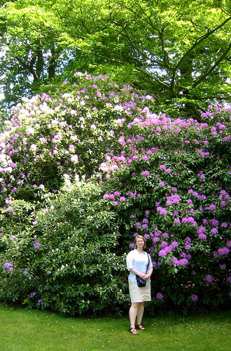Giant Rhodendron