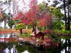 parque Isidora Goyenechea de Cousio, Lota (Juan Barra Photography) Tags: chile park bridge pink parque autumn red plant reflection tree brick