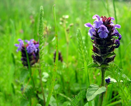 Tiny wildflowers (Foto op Flickr van Linda6769)