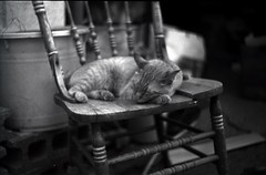 Sleeping pretty friend (Screw Mount Leica IIIf) (potopoto53age) Tags: leica blackandwhite bw film monochrome animal japan cat 50mm blackwhite chair friend pretty kodak sleep kitty tmax400 summitar iiif lovelyphotos blackwhitephotos abigfave bestofcats aplusphoto screwmountleicaiiif calculatingcatsinbw ernstleitzwetzlarsummitar50mmf2 theperfectphotographer thecatwhoturnedonandoff