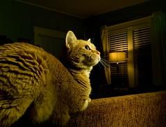 Cat Statuette (benrobertsabq) Tags: cat ed kitty miaow
