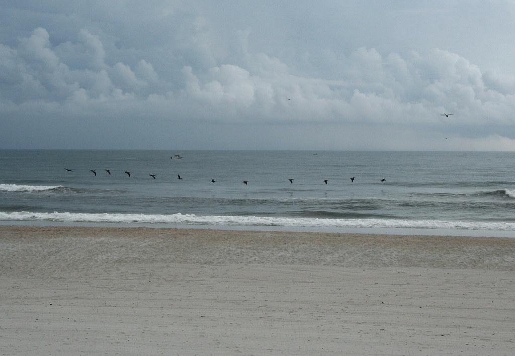 Pelicans on the Beach at Ponte Vedra Inn & Club